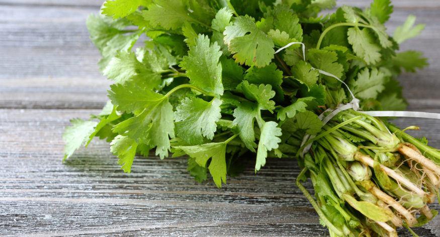 que es el cilantro